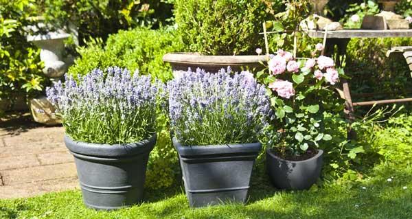 Vasi Bianchi Per Fiori Da Esterno.Vasi Da Giardino Dimensioni Materiali E Prezzi Il